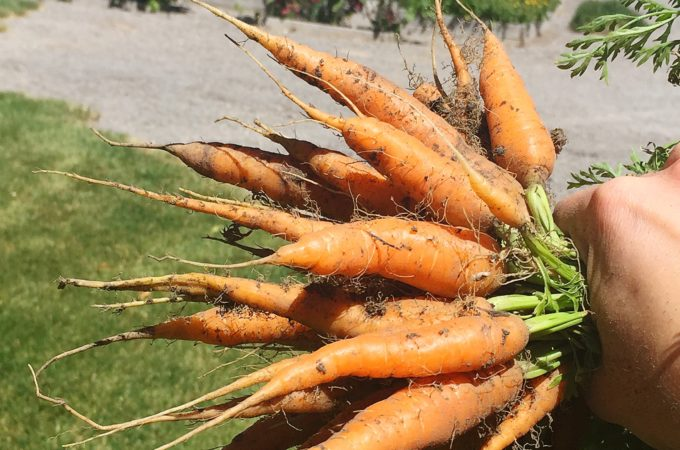 carrots simple life by kels